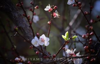 Spring Season in Pakistan