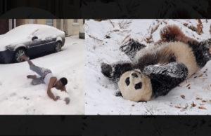 Desi Guy Rolling In Snow